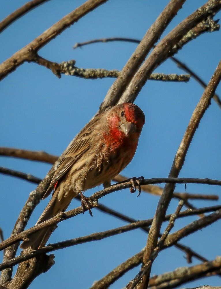 Bird 6 (1 of 1).jpg