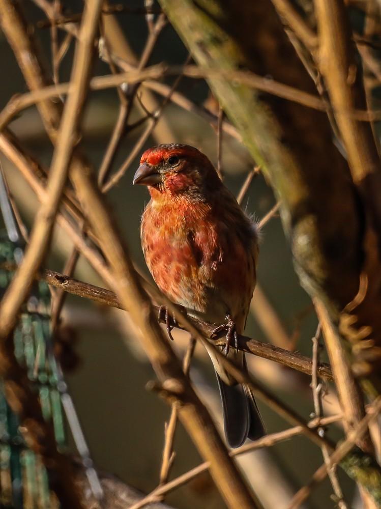 Bird 9 (1 of 1).jpg