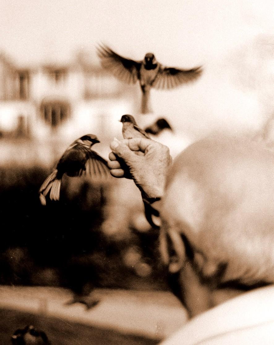 bird charmer sépia.jpg