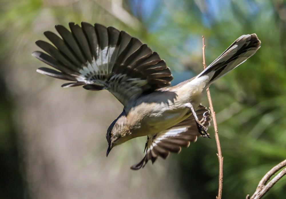Bird Flying (1 of 1).jpg