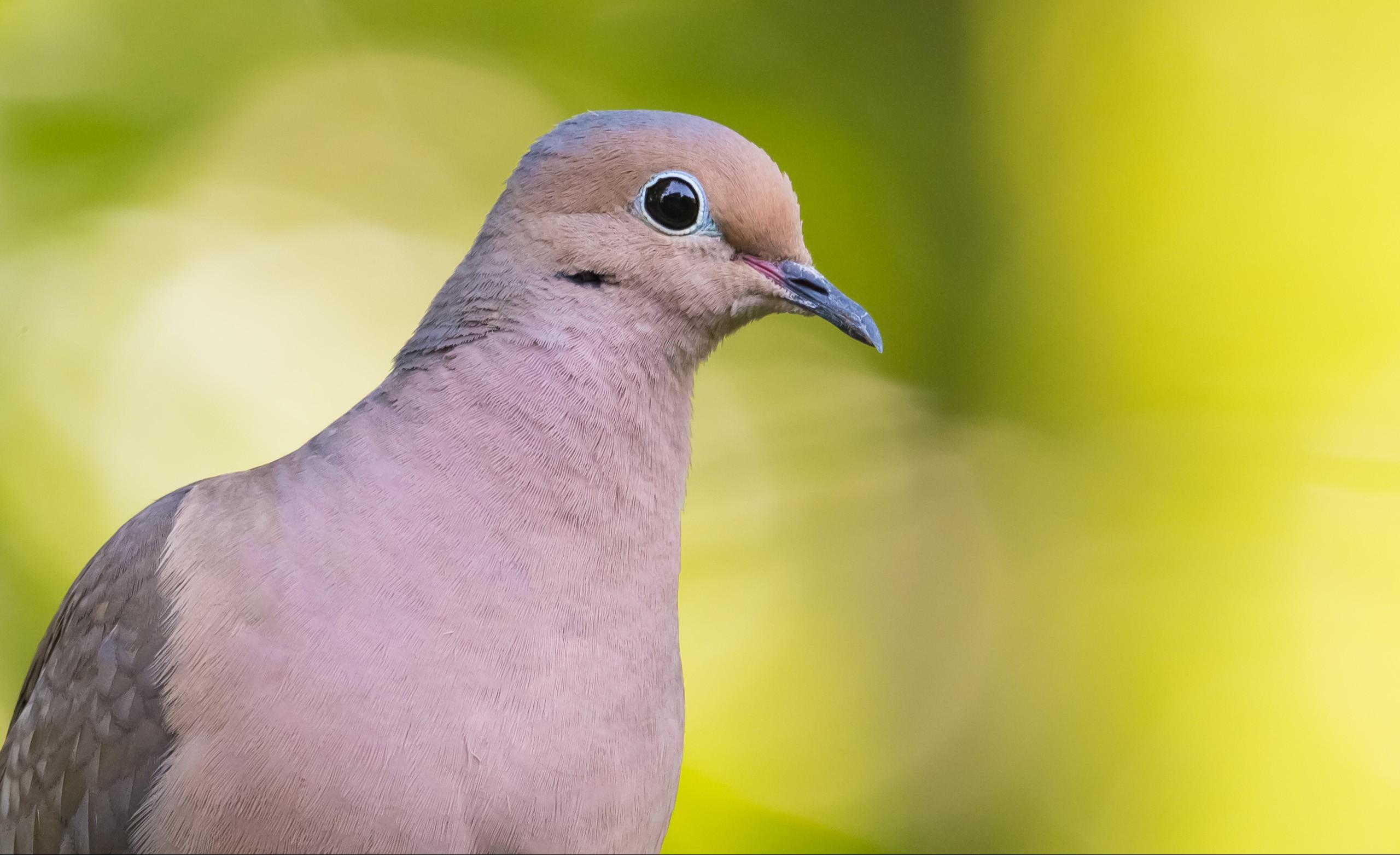 bird LR.jpg