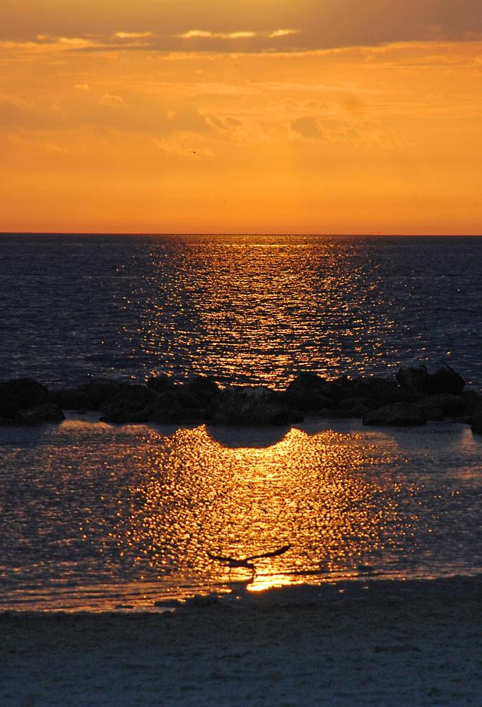 Bird-on-beach-at-sunset---small.jpg