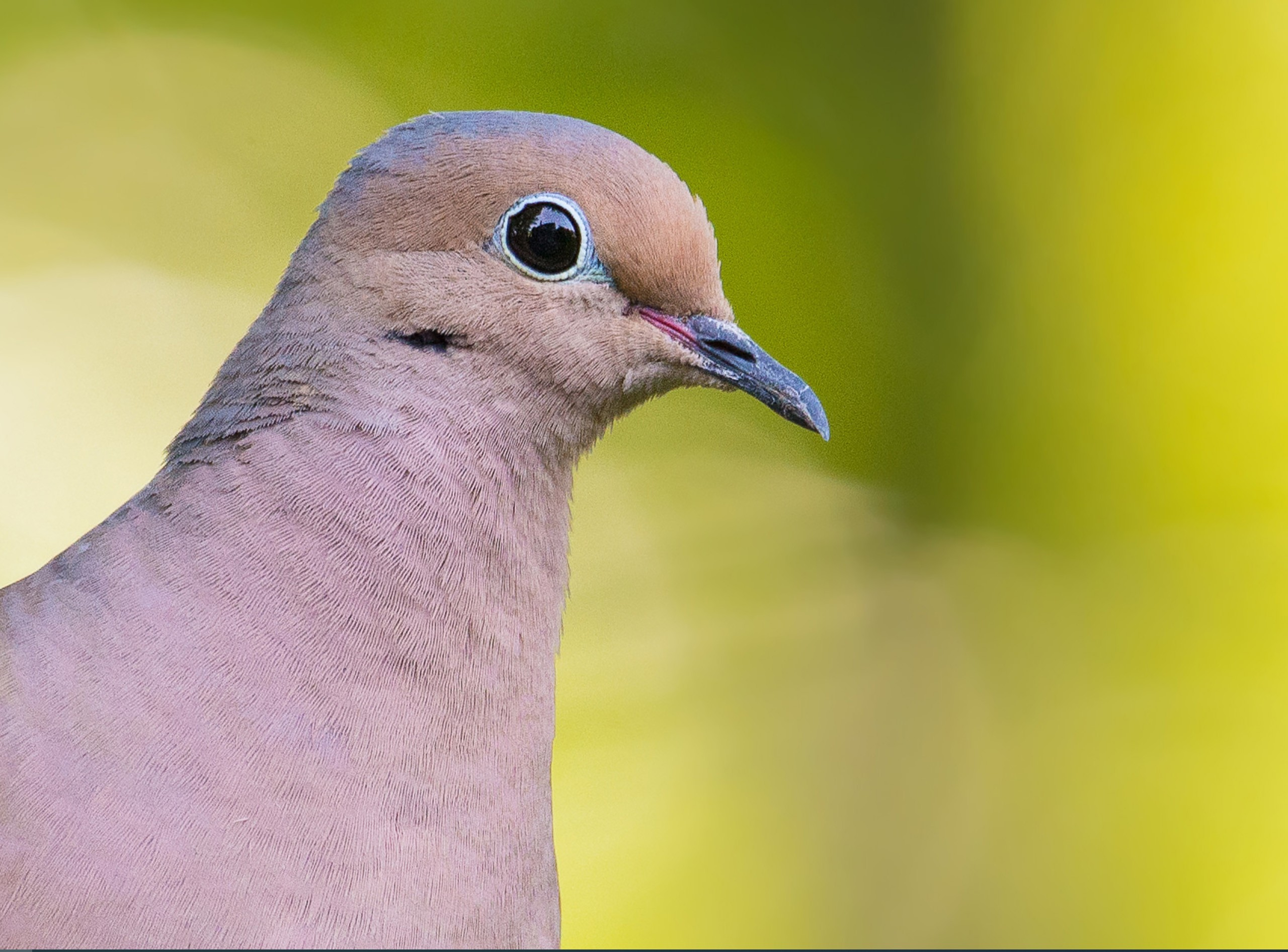 bird PS.jpg