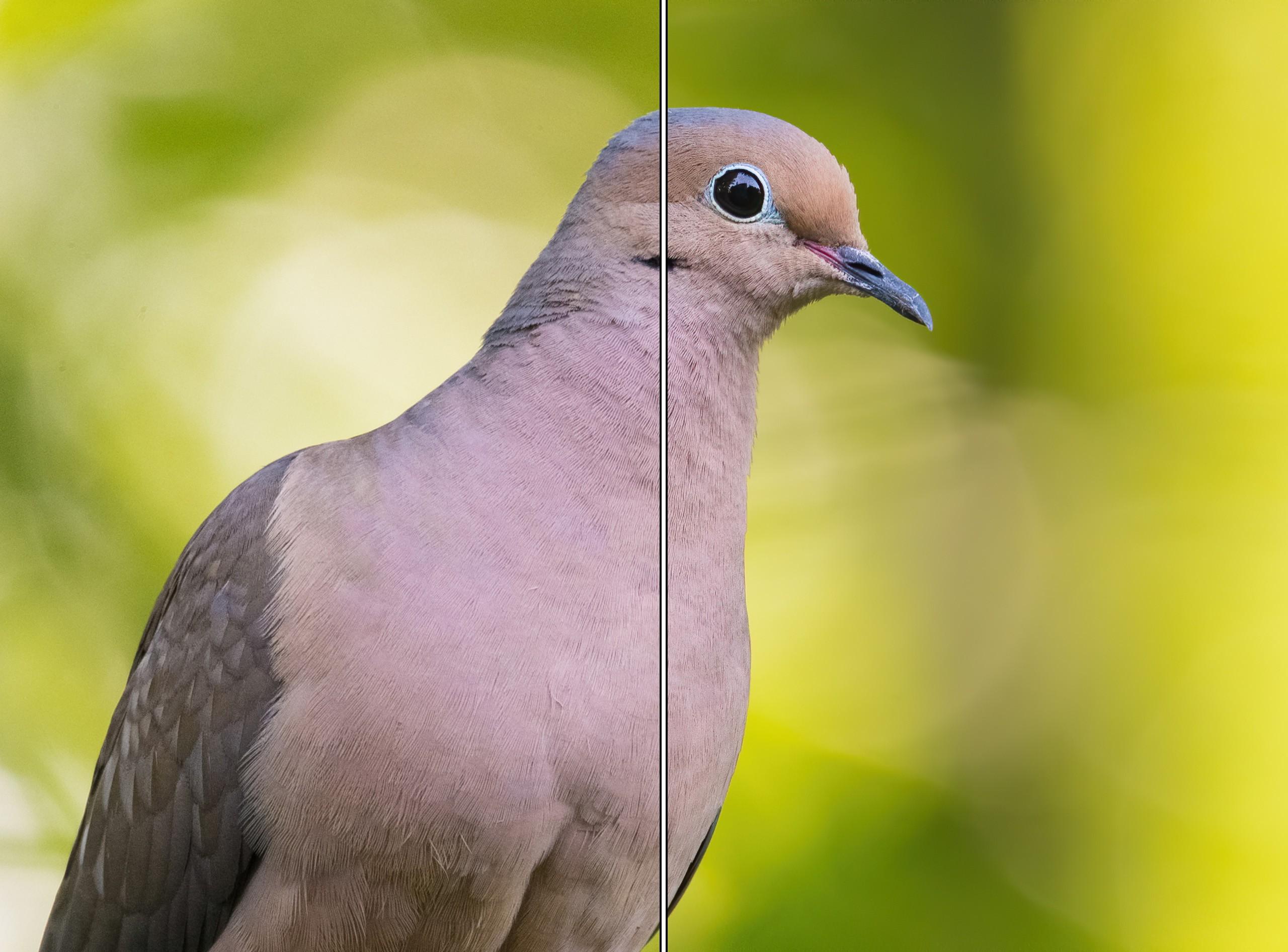 bird split.jpg