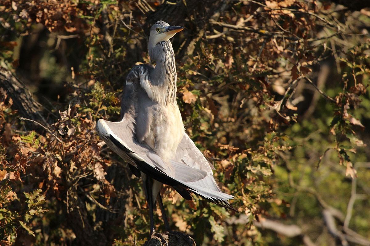 bird-yoga.jpg