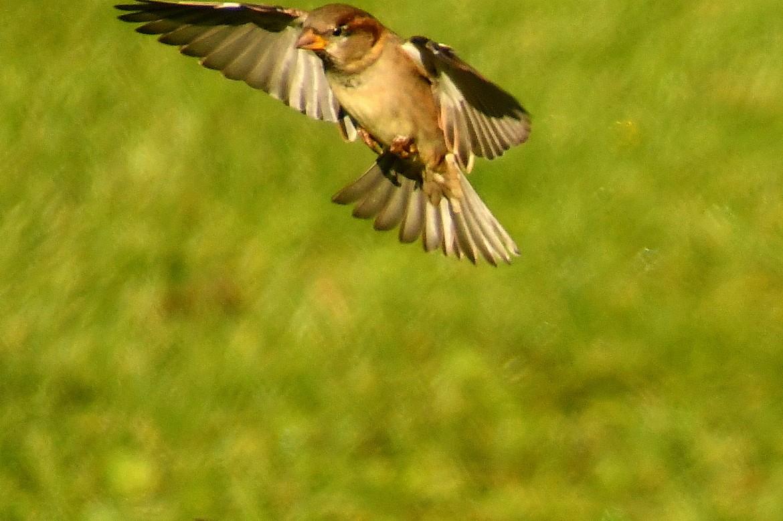 birds 023-001.JPG