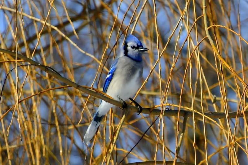 birds 036-002.JPG