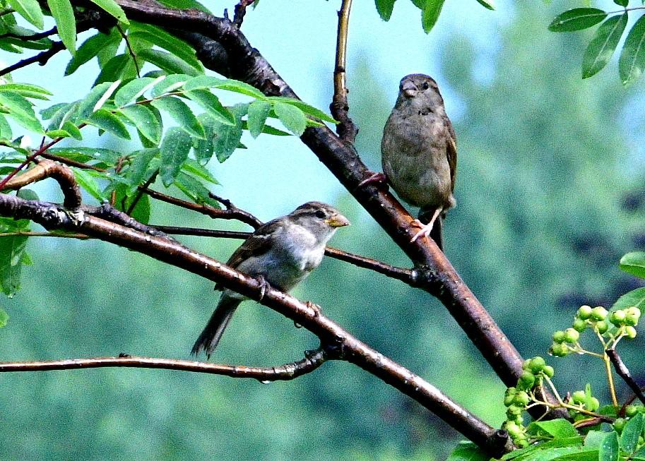 birds 037-002.JPG