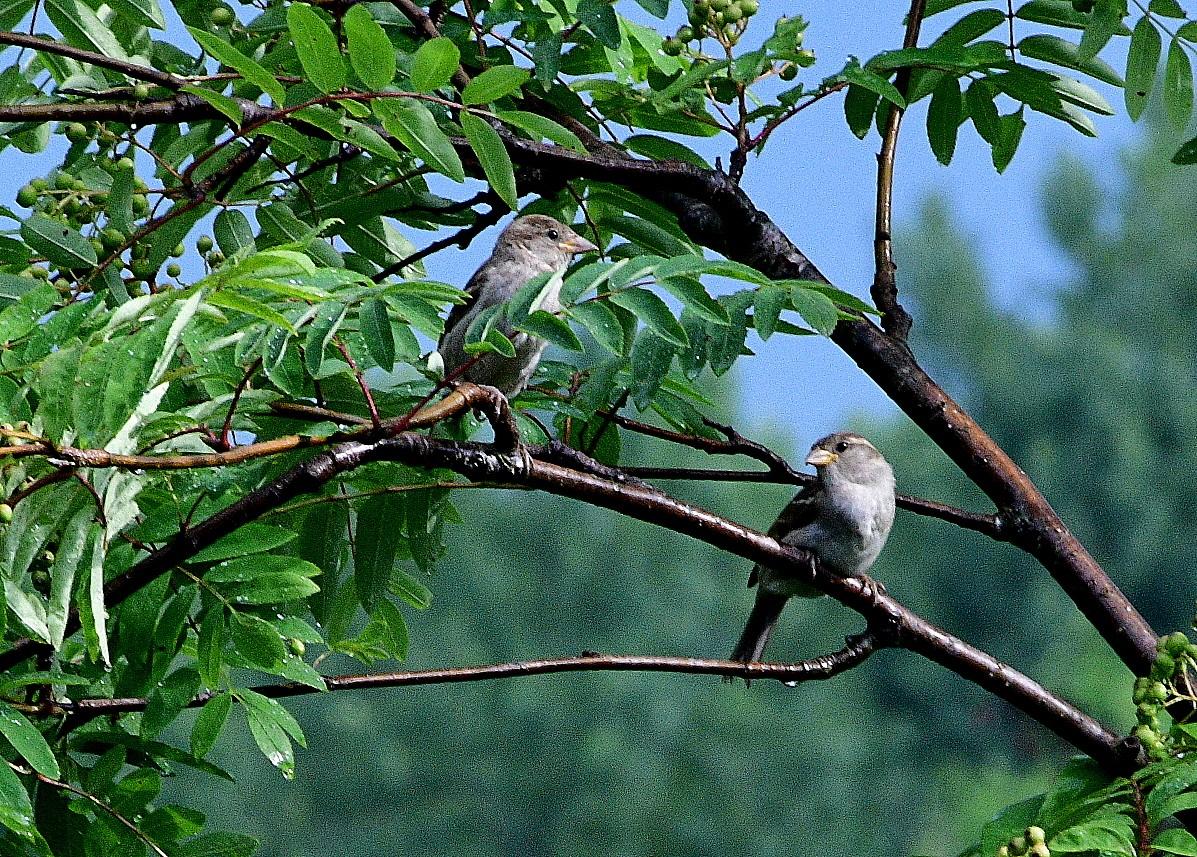 birds 042.JPG