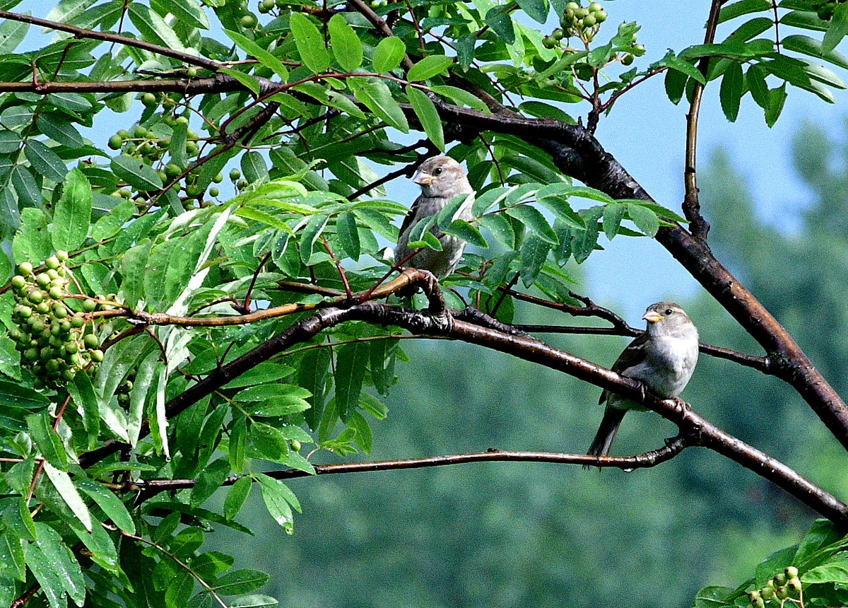 birds 043.JPG