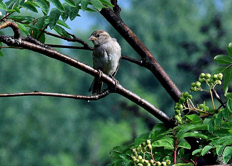 birds 057.JPG