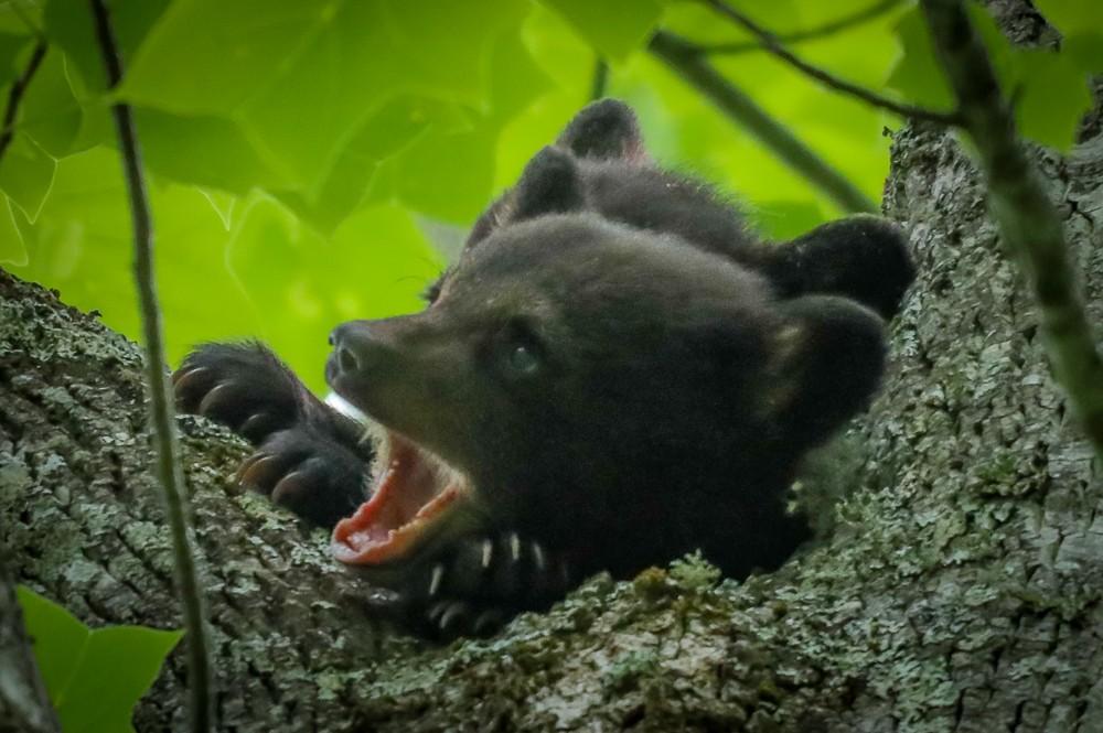 Black Bear 30 (1 of 1).jpg