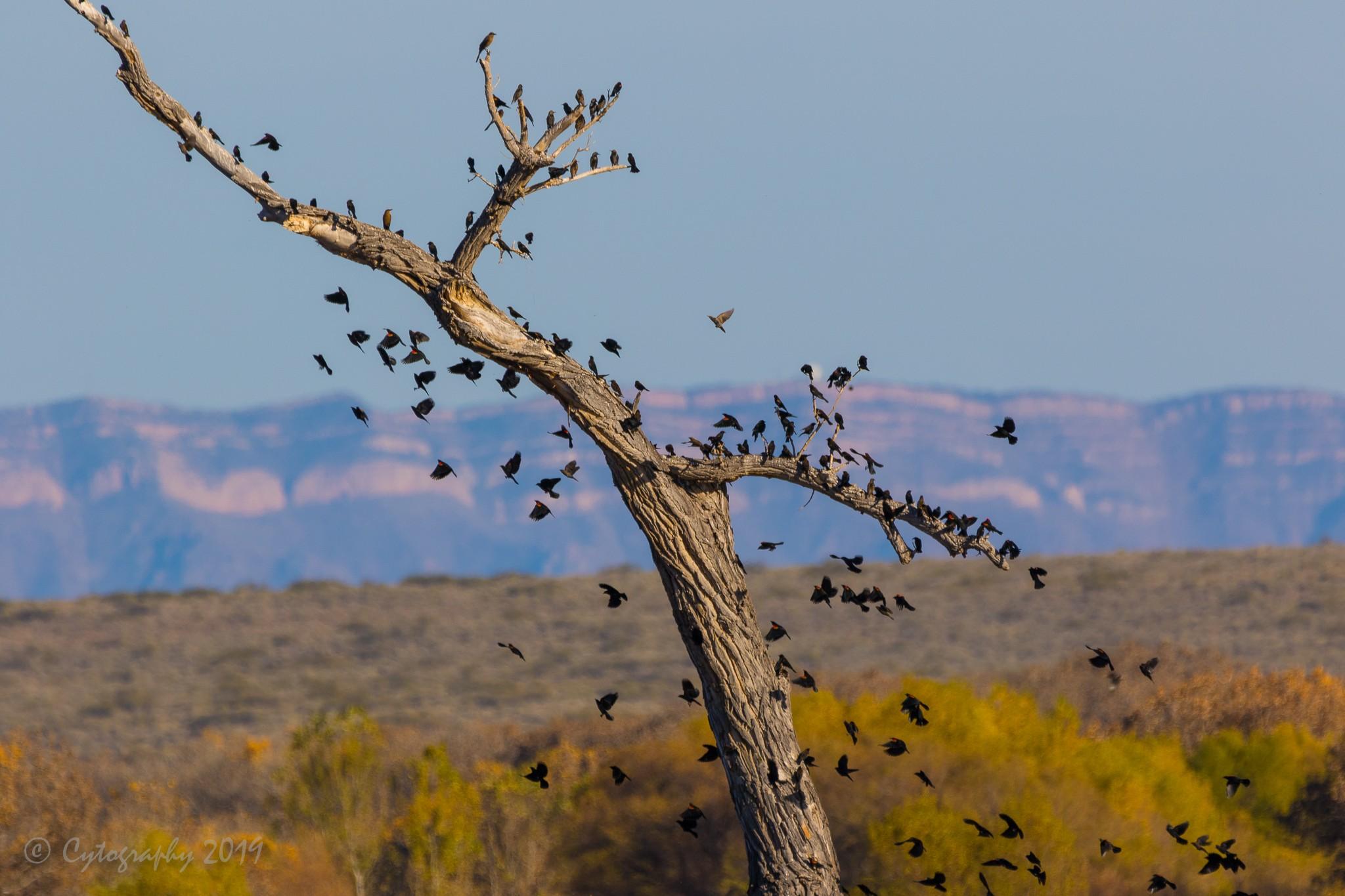 Black Birds-6316.jpg