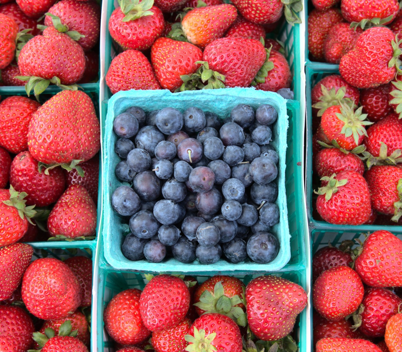 Blueberries sml 3583.jpeg