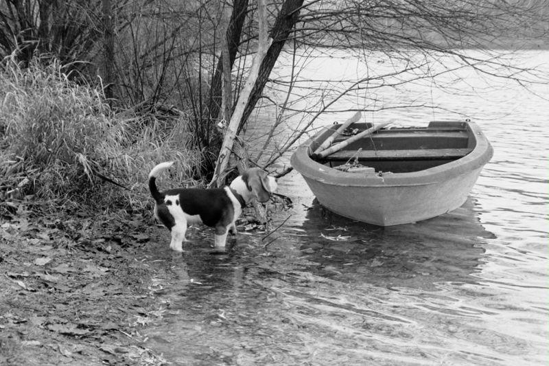boatman 2.jpg