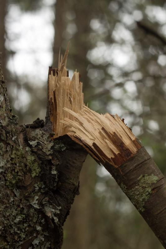 broken branch.jpg