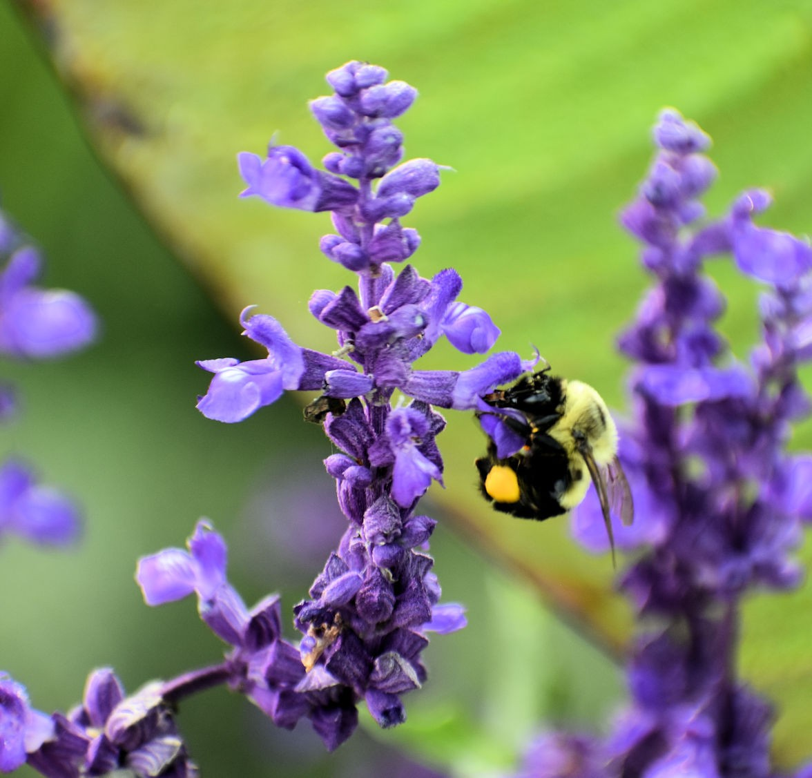 bumblebee2622.jpg