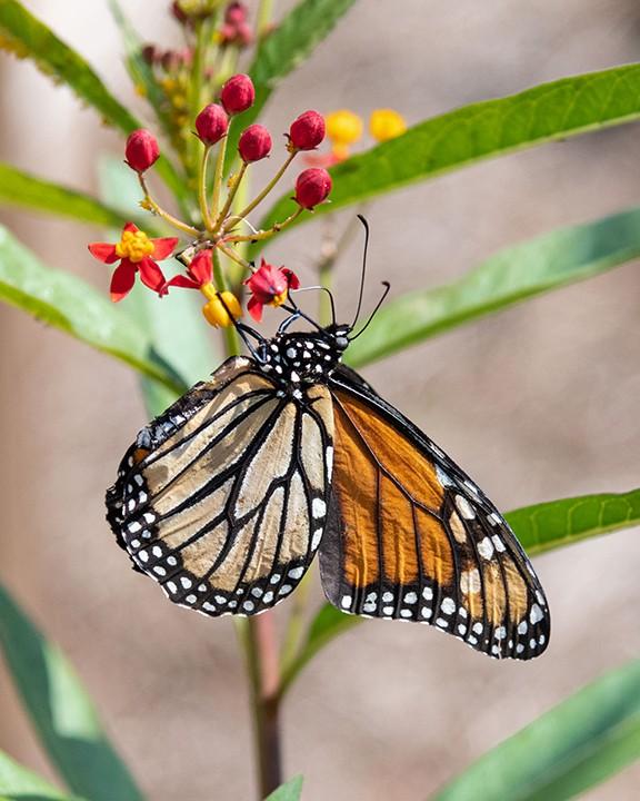 butterflies_5.jpg