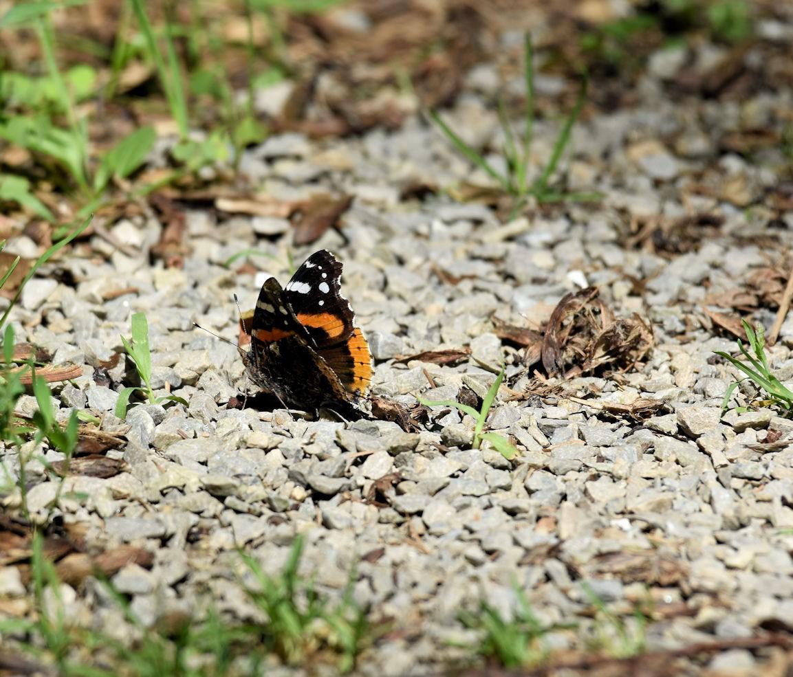 butterfly2576.jpg
