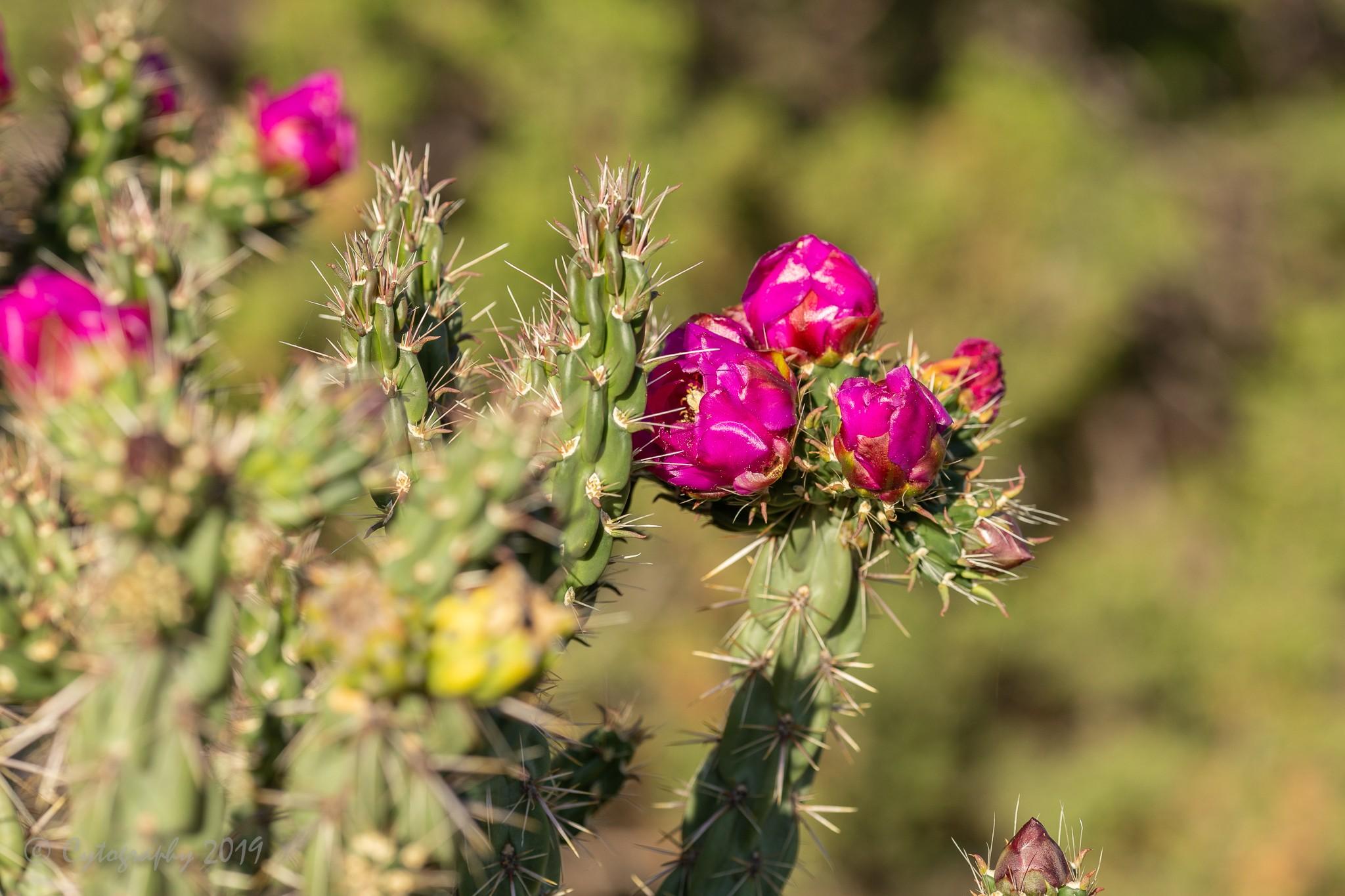 Cactus1-2.jpg