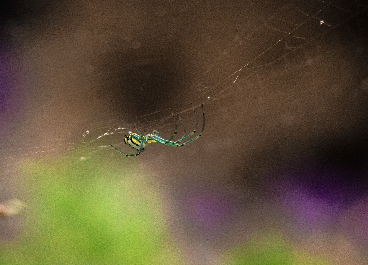 Colorful Spider.jpg