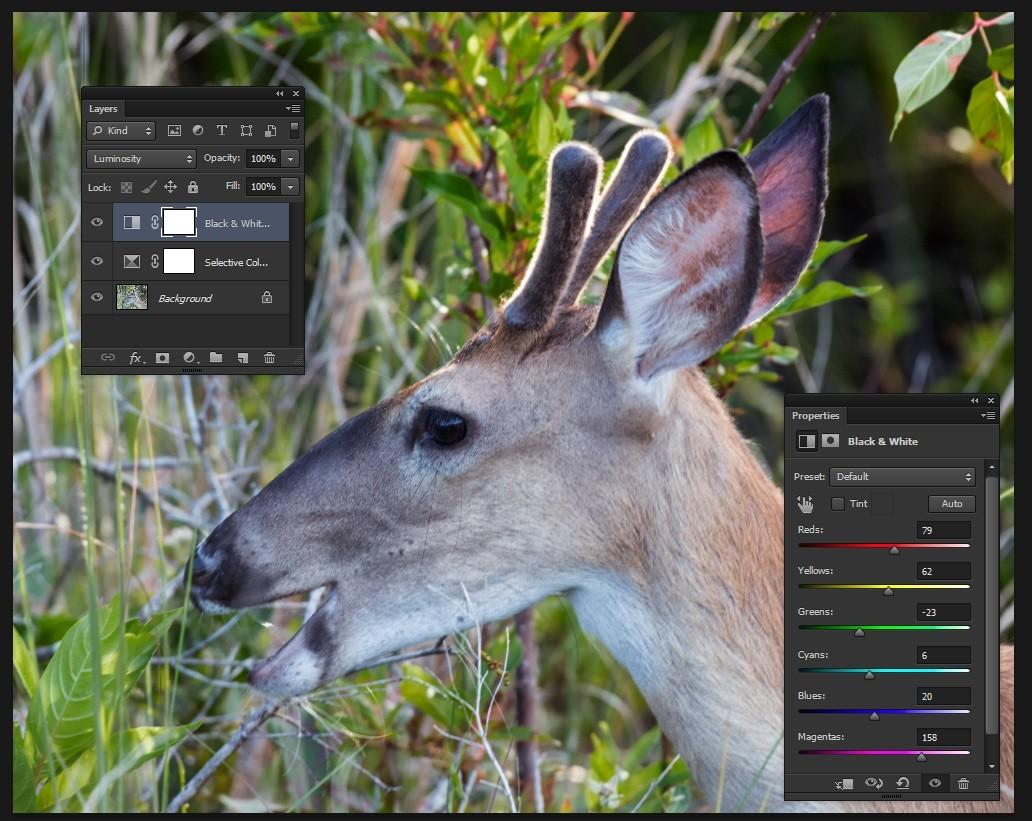 deer 1.jpg