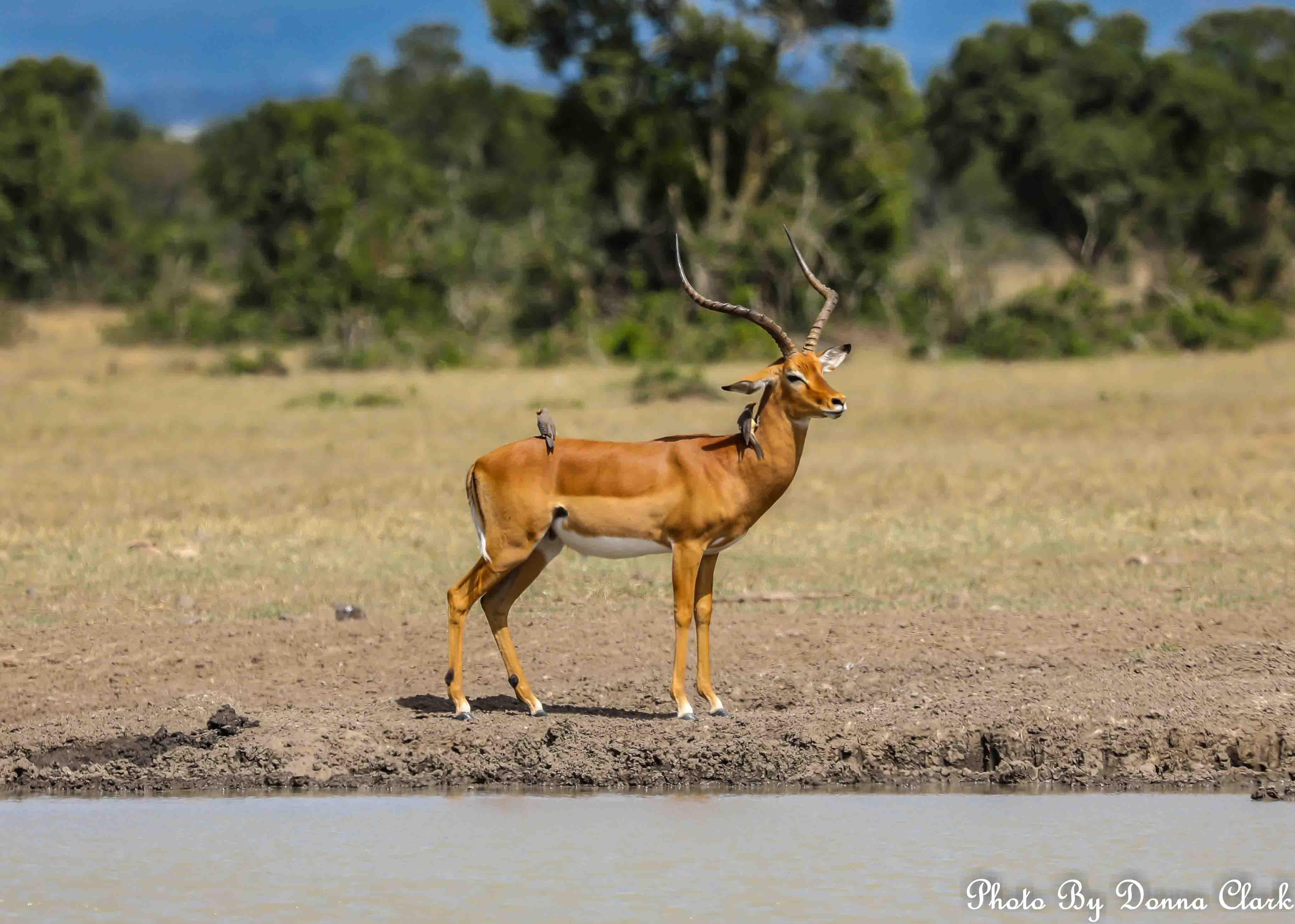 Deer 4 (1 of 1).jpg