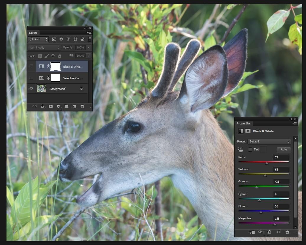 deer as shot.jpg