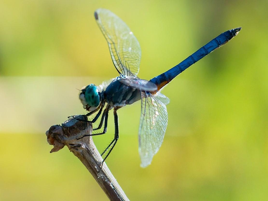 dragonflies-1-3.jpg