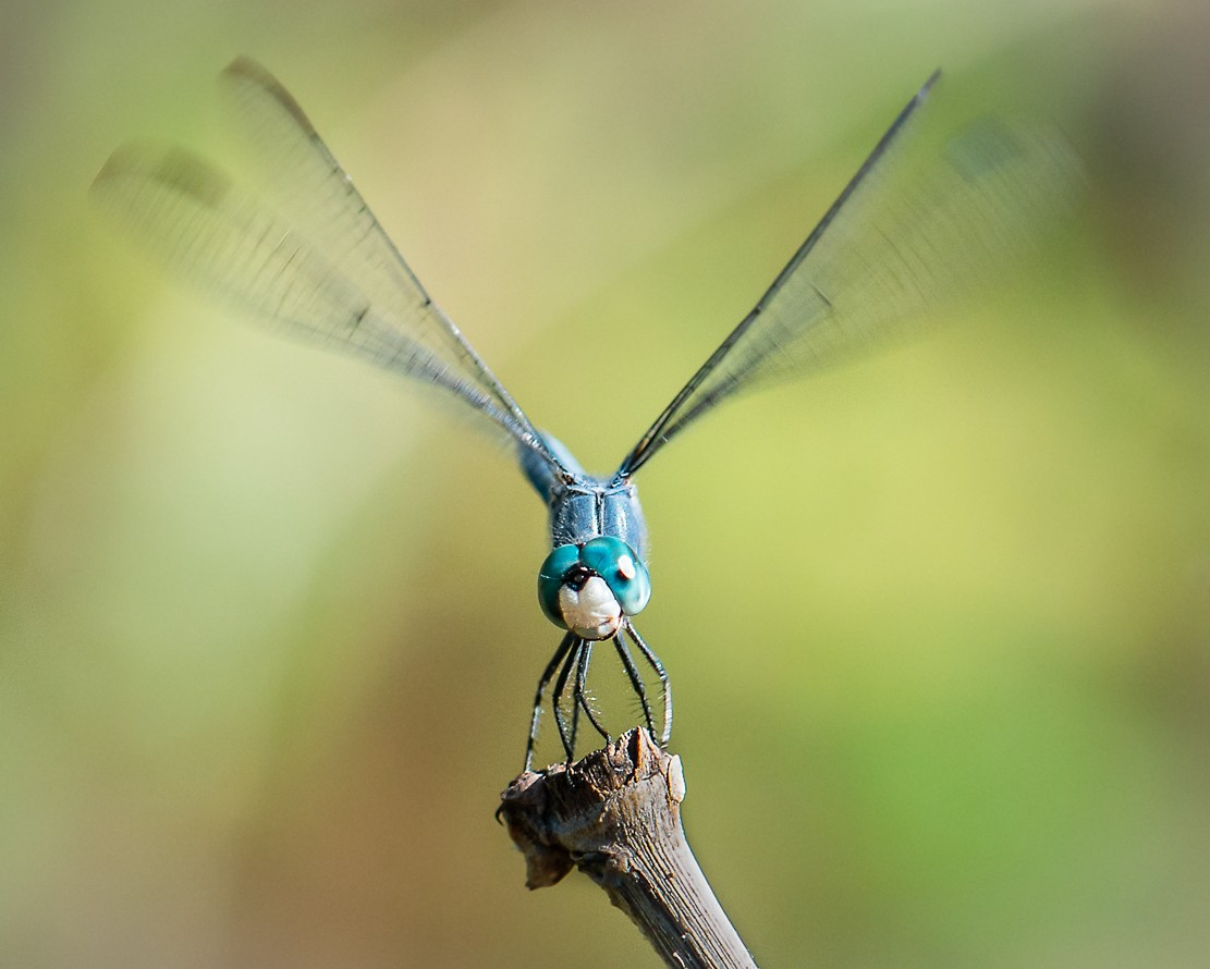 dragonflies-1-4.jpg