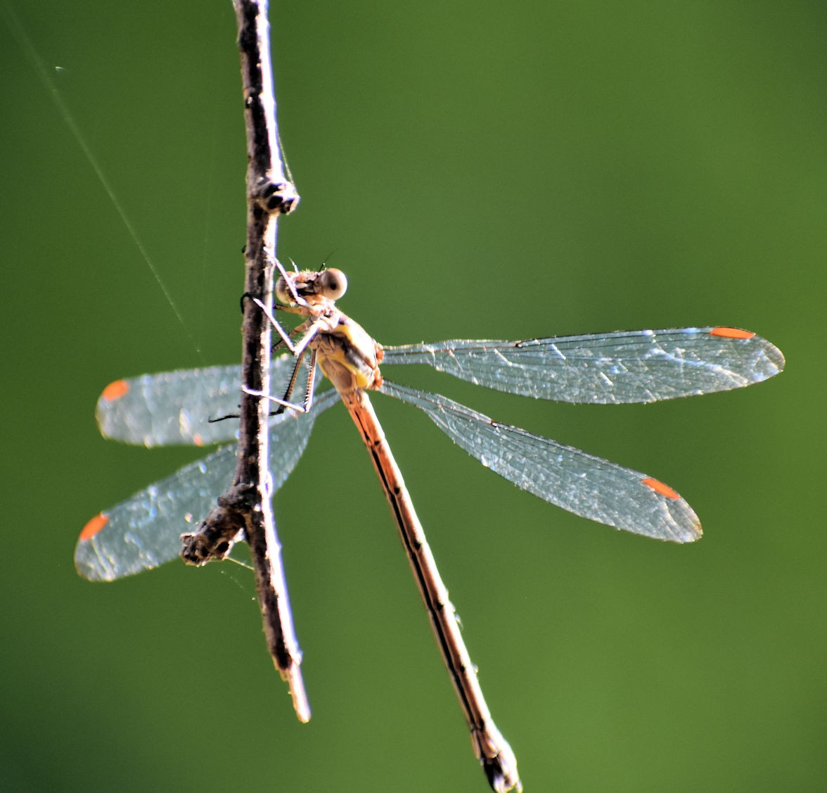 dragonfly2658.jpg