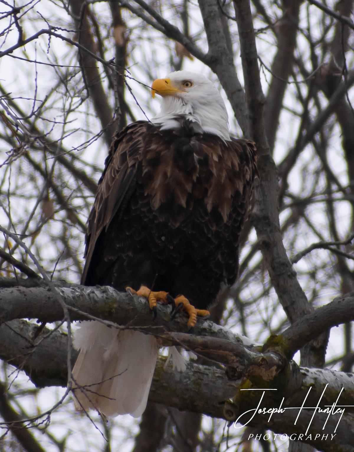 Eagle-0640.jpg