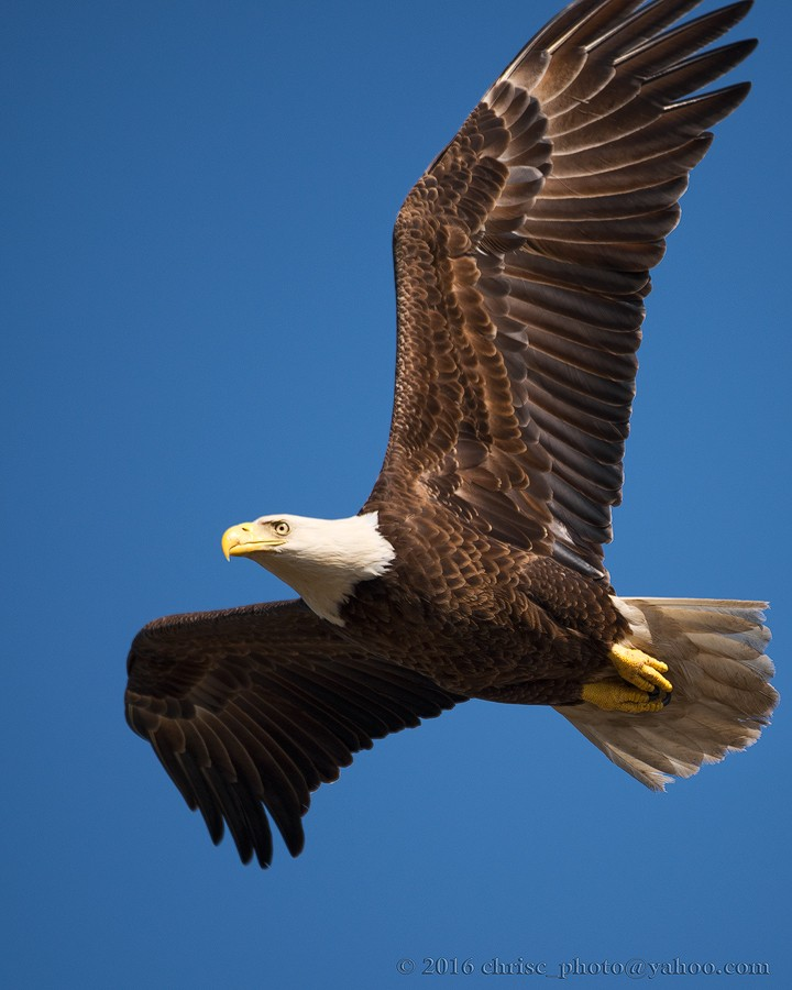eagle-4.jpg