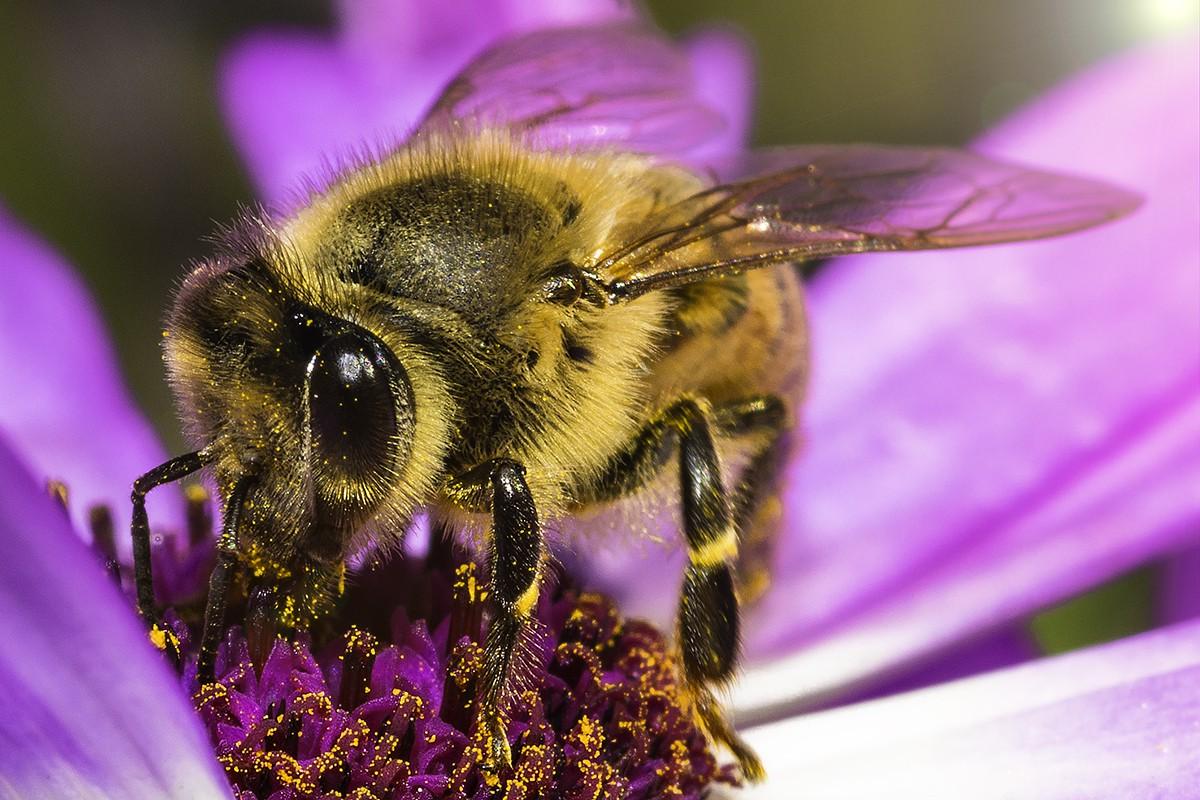 early-bee-3.jpg
