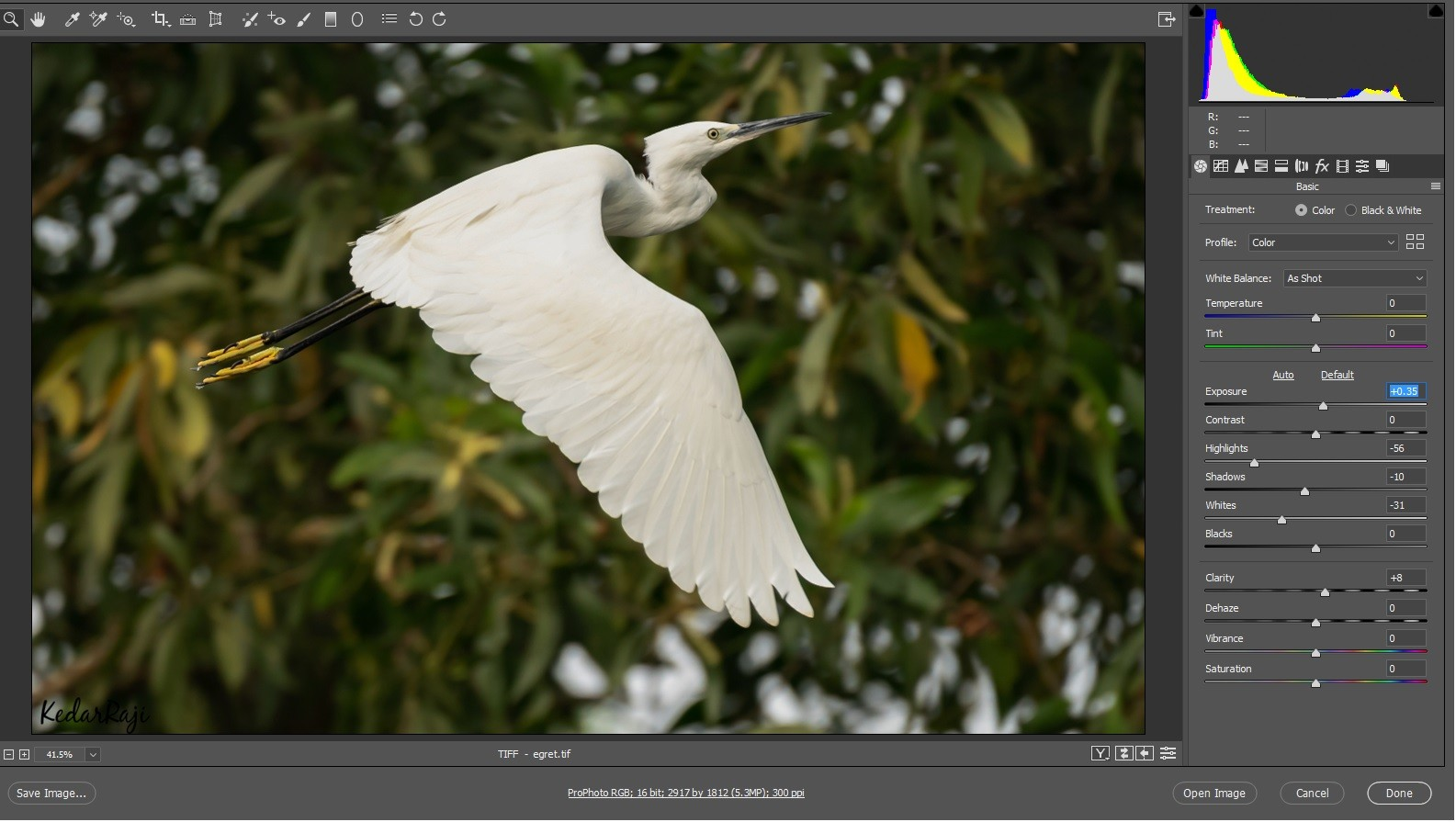 egret in raw.jpg