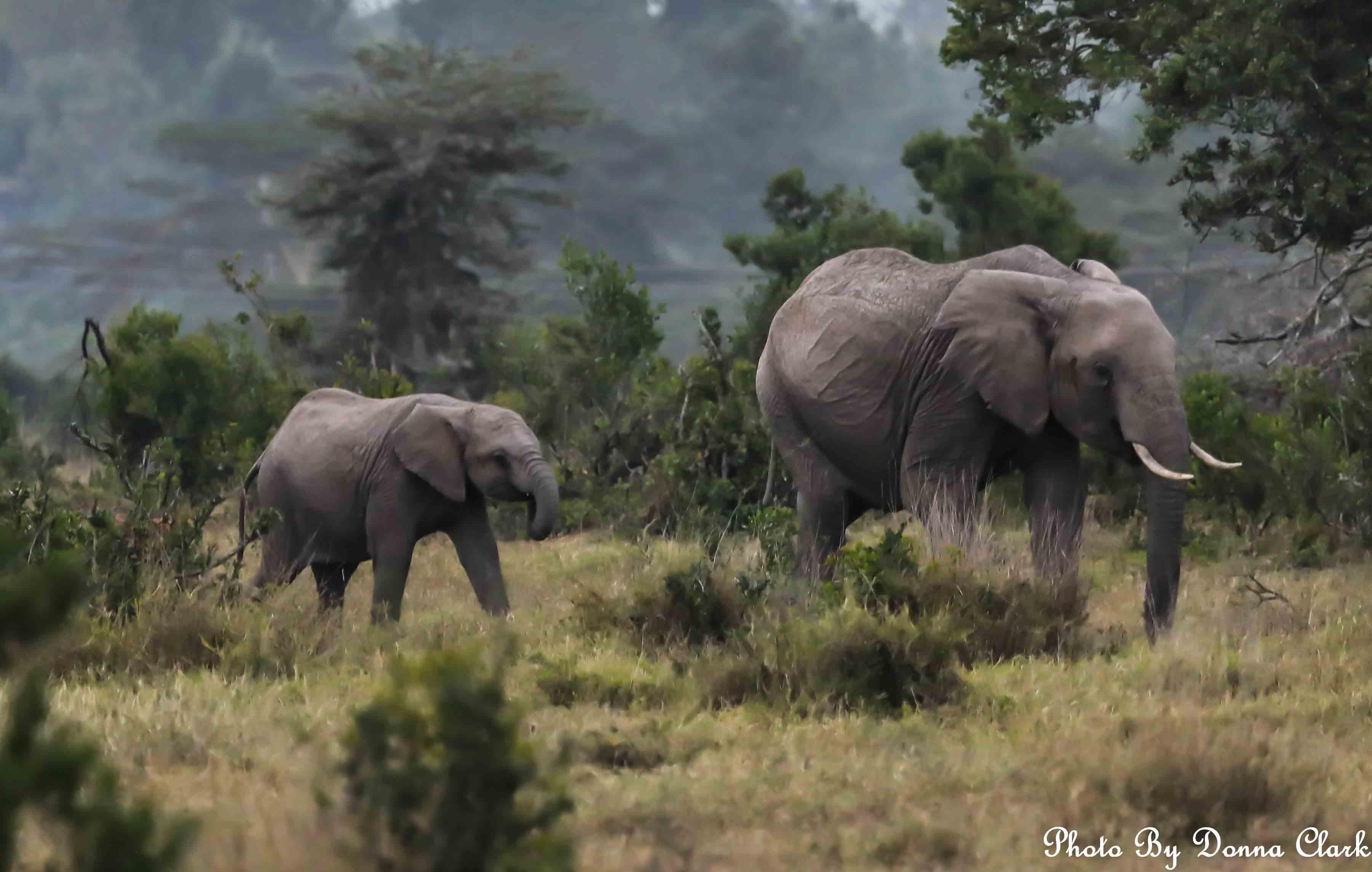 Elephants 1 (1 of 1).jpg