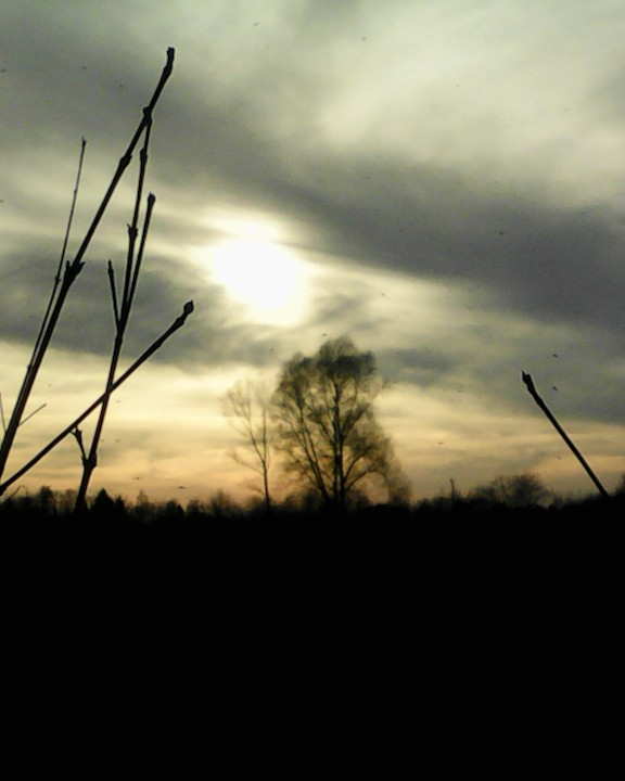 evening sky with trees - 1.jpg