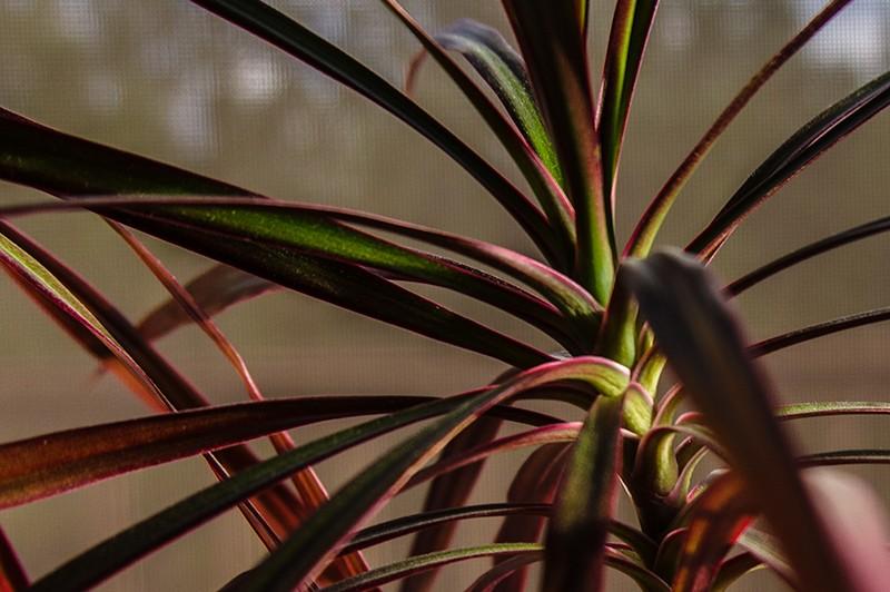 fauna02112018_471-Edit.jpg