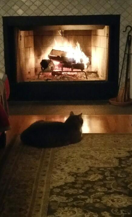 Firecat Finn.jpg