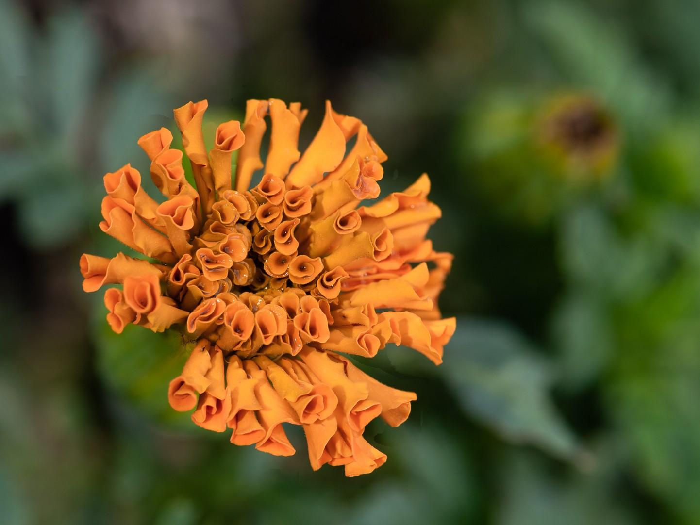 flowers-1-12.jpg