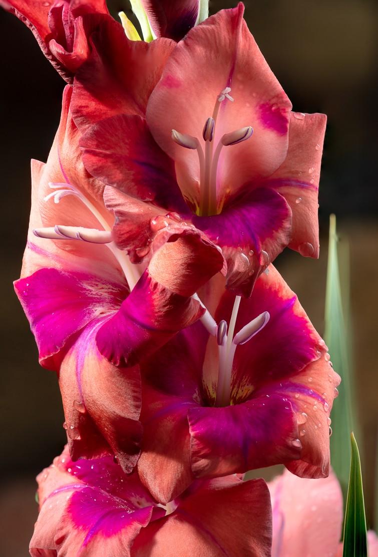 flowers-1-14.jpg