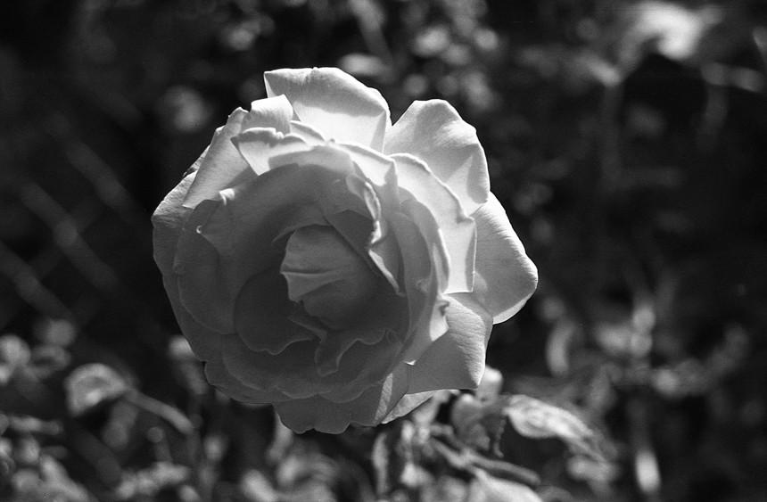flowers-1-54.jpg