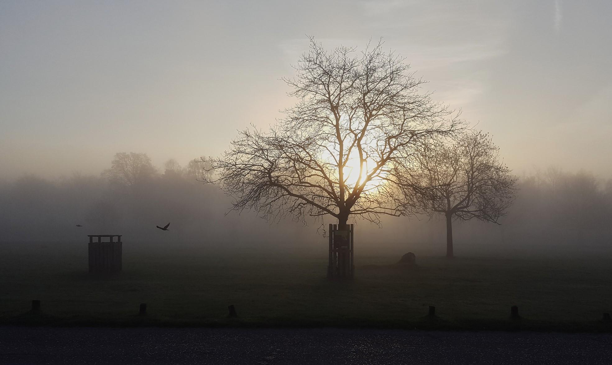 Fog Trees_30.jpg