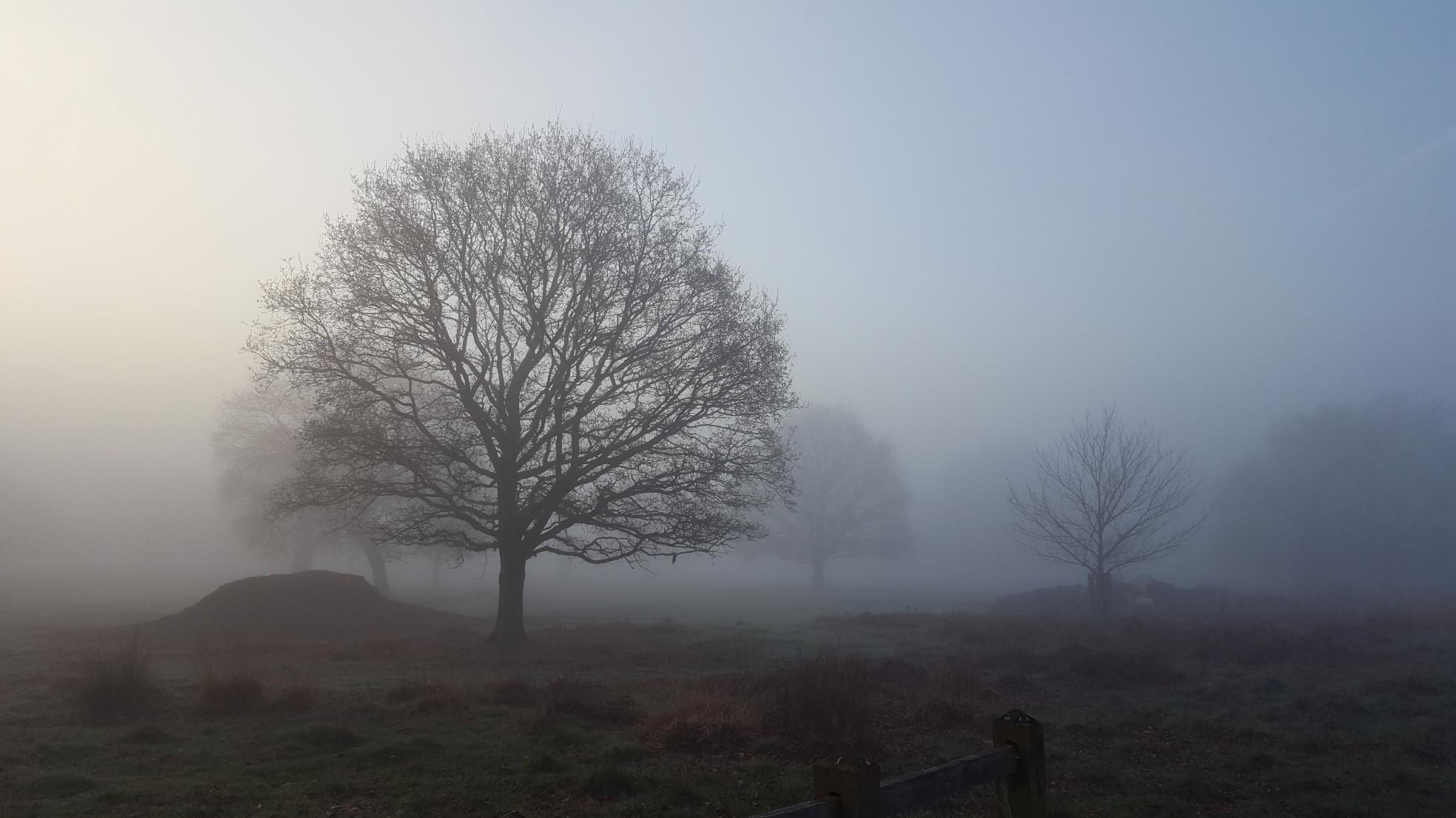 Fog Trees_31.jpg