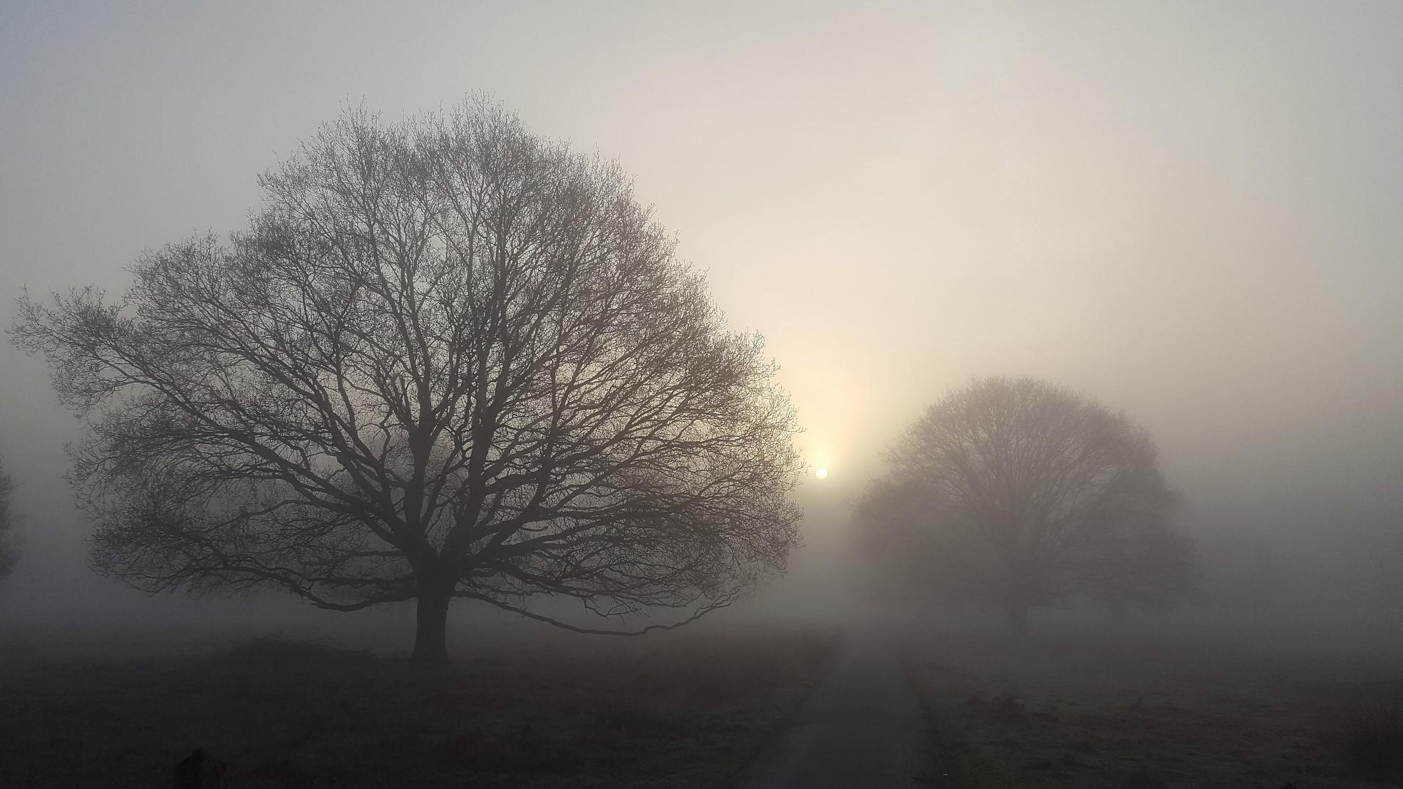 Fog Trees_32.jpg