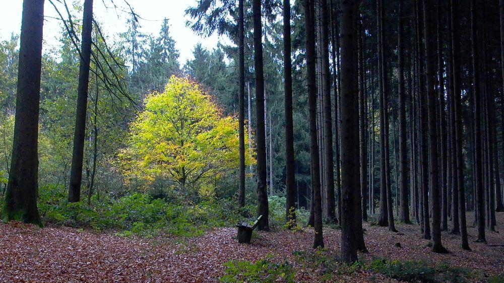 forest gold.jpg