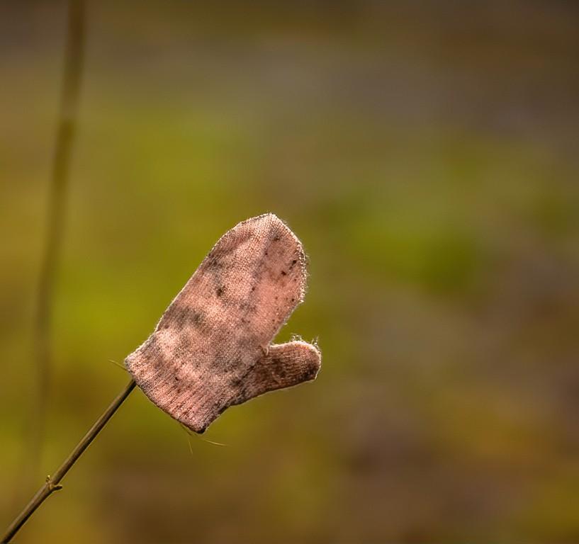 glove-1- DENOISED-denoise.jpg