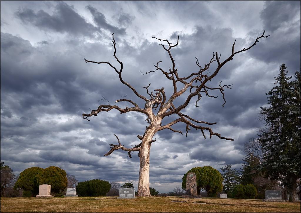 gnarly_tree.jpg