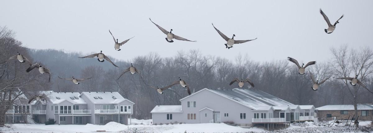 Goose-0771.jpg