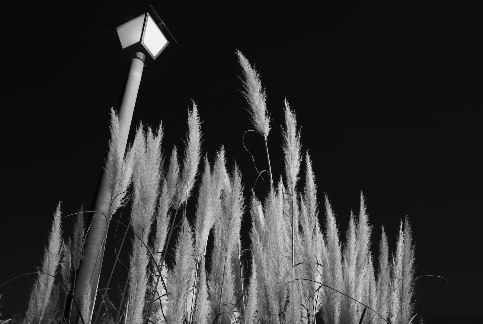 grasses and post4_sm.jpeg